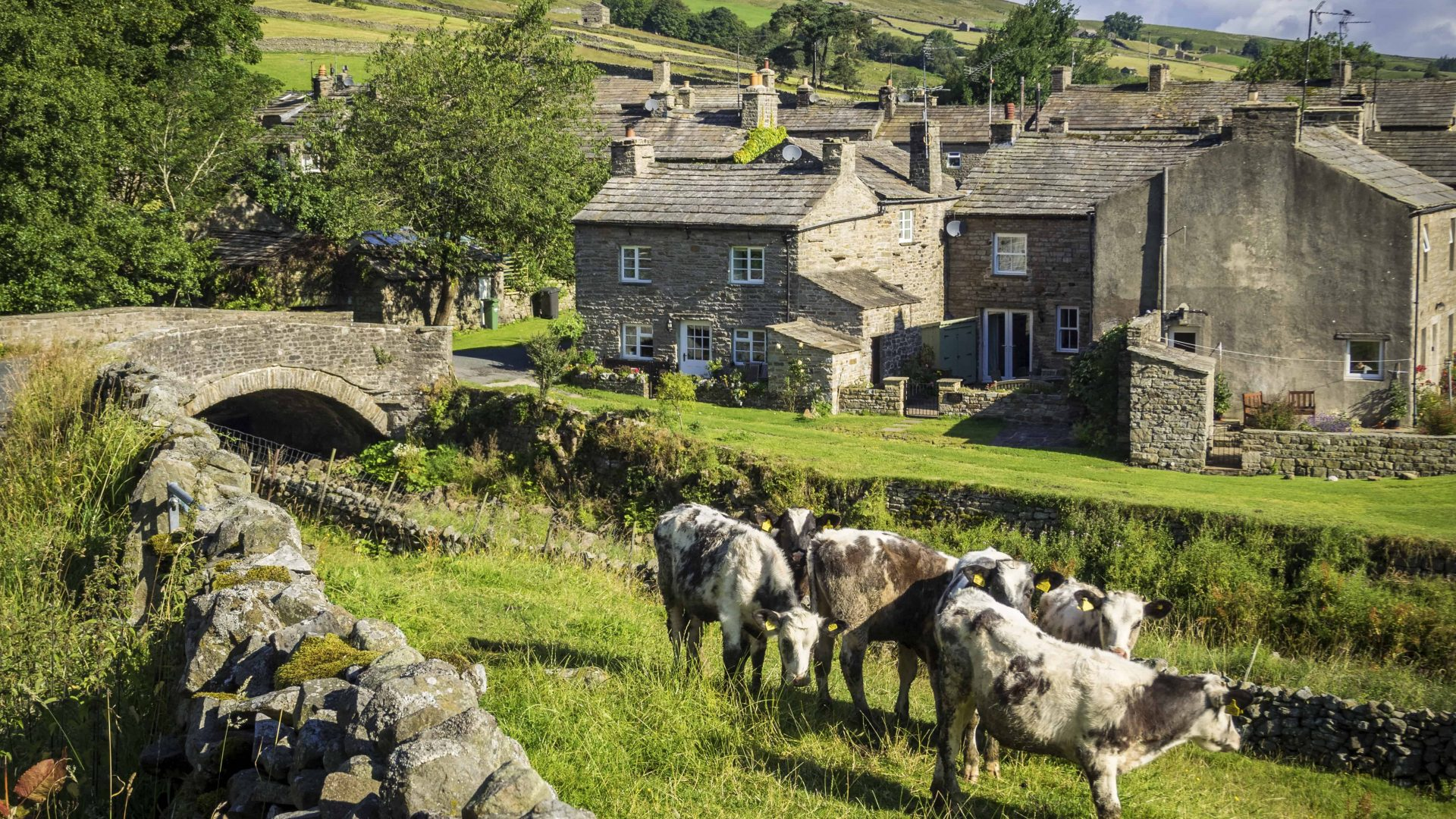 Calves grazing, Thwaitedale, North Yorkshire, England. Bridge over stream and traditional stone cottages.